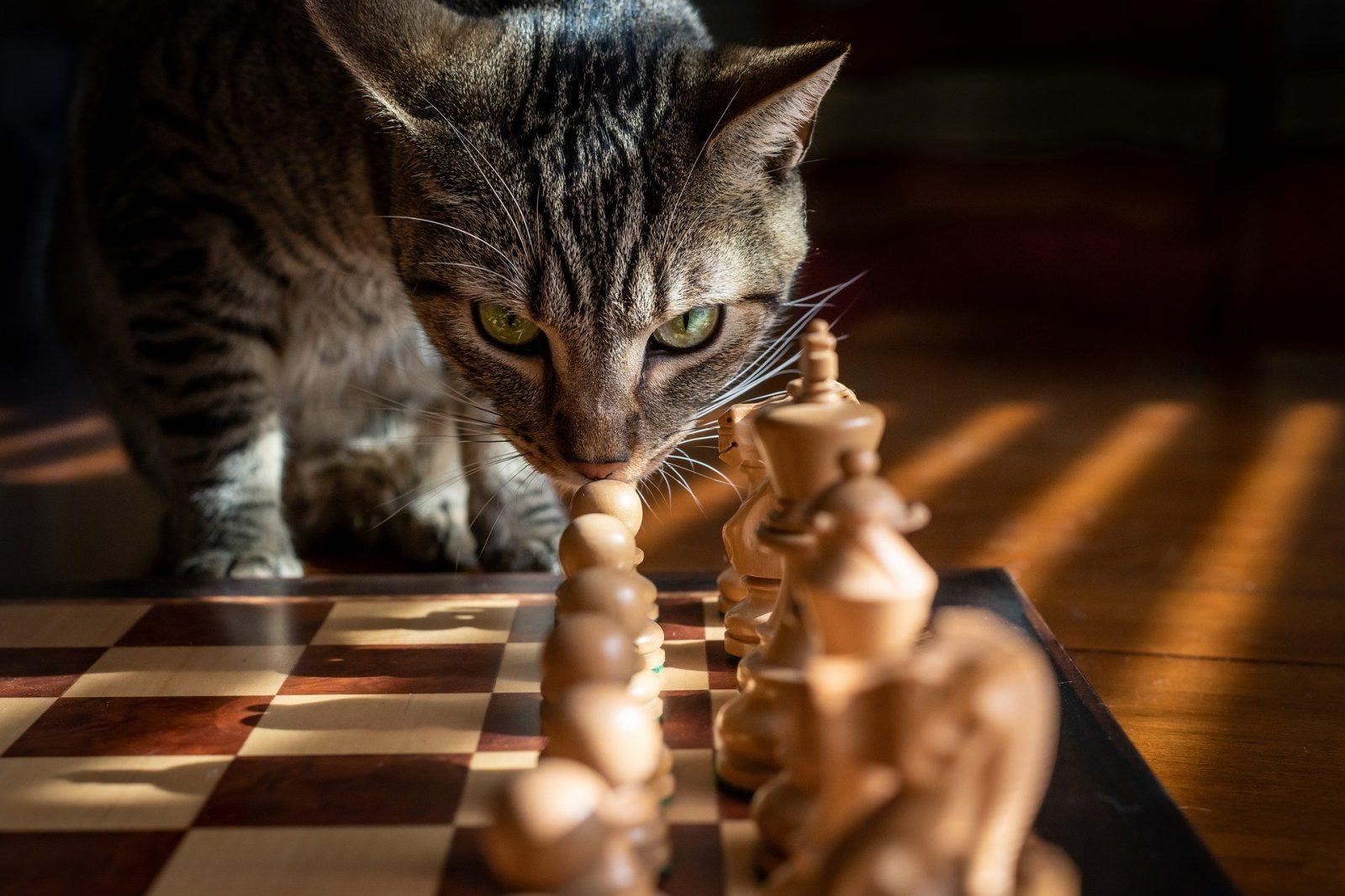 Kissa ja shakkilauta